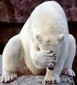 polar bear facepalm (2)
